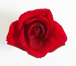 A closeup top shot of a beautiful single red rose
