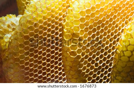 A closeup view of honeycombs