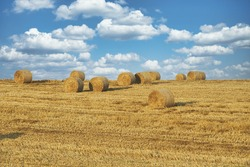 A closeup view of multiple hay roles in the field on a sunny summer day