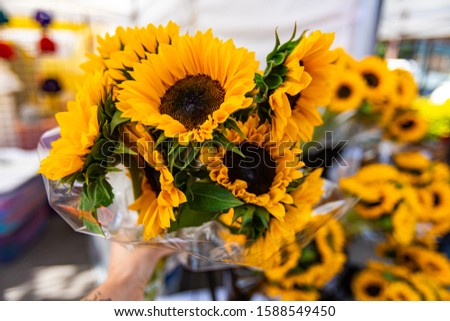A closeup view on a bouquet of colorful dwarf sunflowers, Helianthus cultivar, selective focus as shopper picks vibrant bunch from market stall