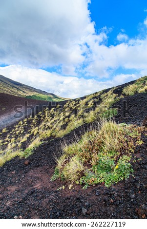 A closup of a clump of grass on a black volcanic ground near Etna volcano, Sicily, Italy #262227119