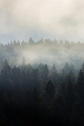 A cloudy forest treeline into the mist.