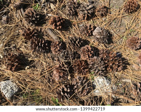 A cluster of pine cones on pine needles covering the ground.