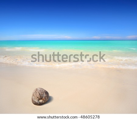 A coconut washed ashore on a tropical beach. - stock photo