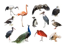 A collage of birds from different continents
