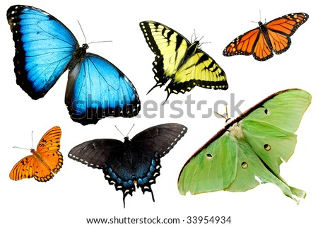 A collage of butterflies and moths isolated on white background, horizontal