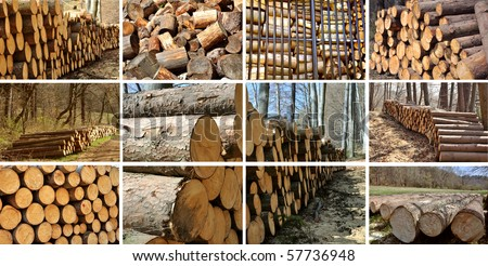 A collage of different types of wood piles, save of natural environment concept