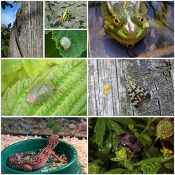A collage of eight photos of different animals and insects.