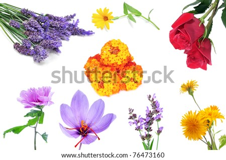 a collage of many different kind of flowers