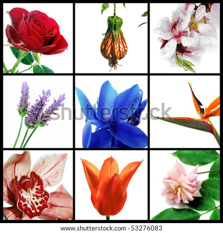a collage of nine pictures of different flowers