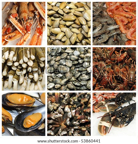a collage of nine pictures of different seafood