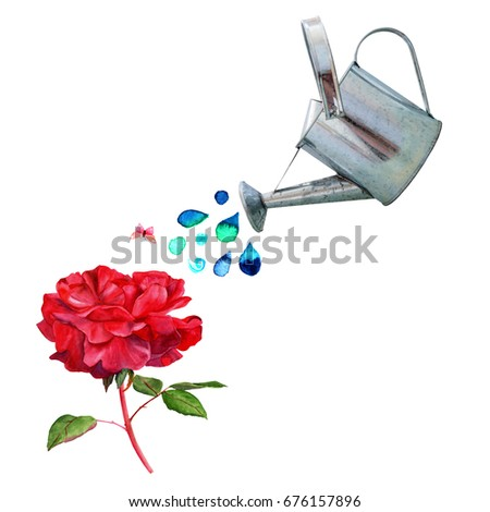 A collage of watercolor drawings and a photo cutout. A watering can pouring water over a vintage style red rose, with a little pink butterfly, and a place for text, on white background