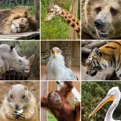 a collage photo of some wild animals