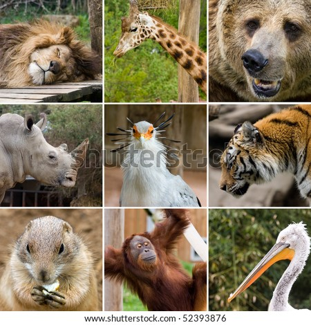 a collage photo of some wild animals #52393876