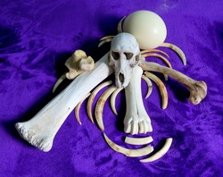A collection of bones, wild boar tusks and ostrich egg ready to be used in a tribal ceremony or African riyual.