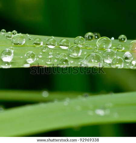 A collection of bubbles atop a green leaf.
