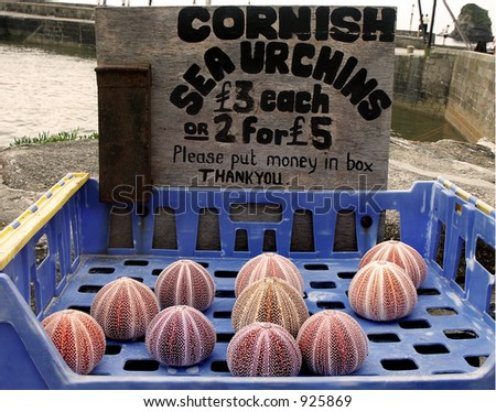 A collection of Cornish sea urchins for sale on the dock of a small fishing village in Cornwall, England.