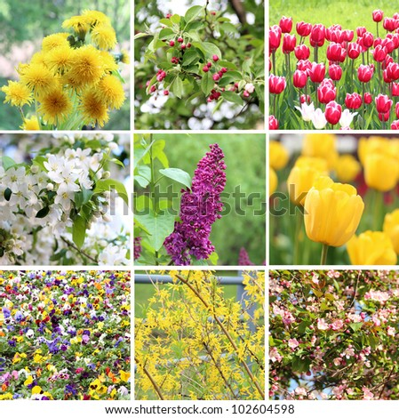 A collection of nine pictures of flowers blossoming in spring: dandelions, cherry blossom (sakura), apple blossom, lilac, Fosteriana tulips (yellow and red and white), pansies and Forsythia bush