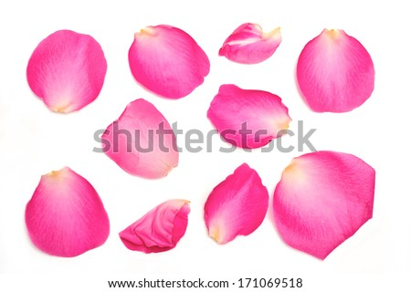 A collection of pink rose petals on a white background.  #171069518