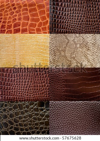 A collection of reptile skin textures.