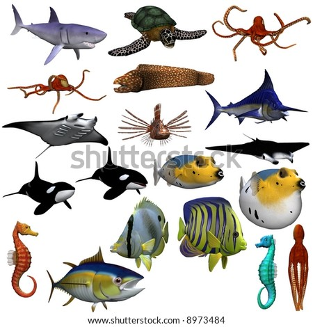 A collection of sea life