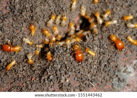a collection of termites that come out to the surface after the rain fell. termite colonies mostly live below the surface of the land. these termites will turn into larons. macro photography.