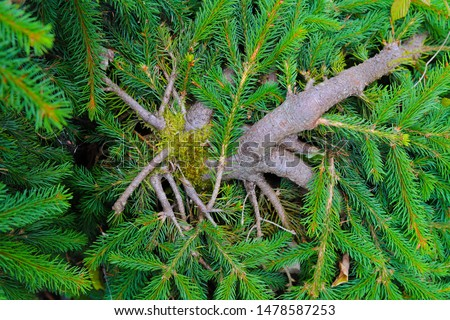 A collection of vibrant green branches on a primary brown branch. The perfect balance of saturation, vibrance and exposure.