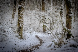 A color image of foot trail in a winter forest covered in snow taken outside of Portland, Oregon.