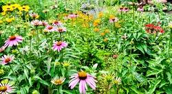 A colorful backyard pollinator garden. Long Island, New York.