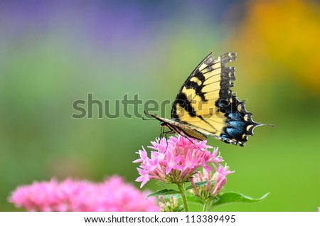 A colorful butterfly on pink flowers - stock photo