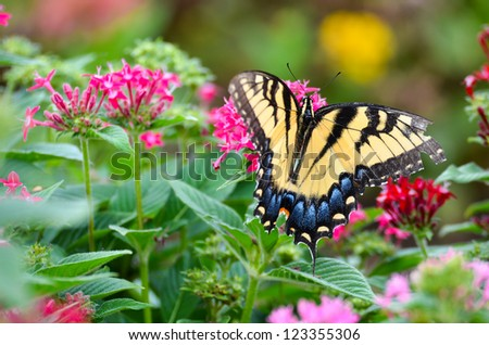 A colorful butterfly on pink flowers