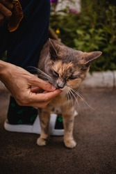 A colorful cat takes food from the hands of a woman on the street in the summer.