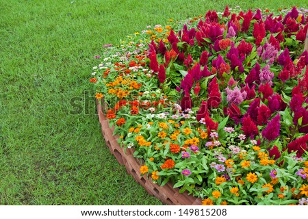 a colorful flower with different types of flowers in the garden.