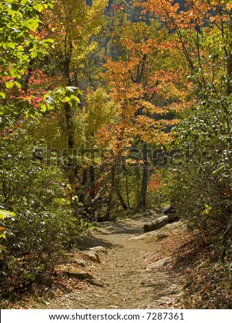 A colorful hiking trail in the woods of Shenandoah National Park, West Virginia.