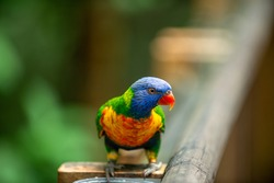A colorful parrot bird standing on a wooden balcony at the zoo. Forest background blurred and beautiful bokeh.