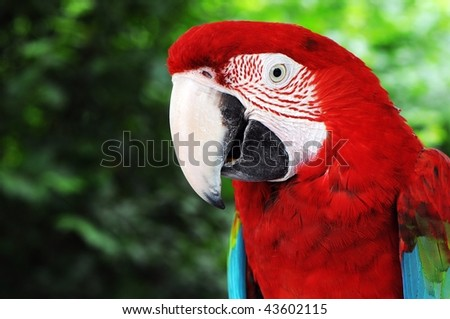 a colorful red macaw parrot sitting on a branch.