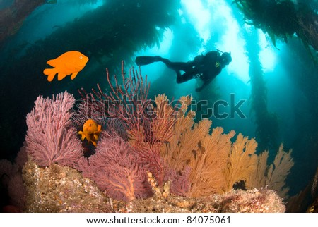 A colorful underwater reef with a scuba diver and orange fish.