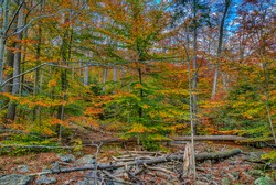 A colorful view of a forest  close to Cunningham Falls in the Western Maryland Mountains during the fall season.