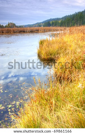 A colorful wetlands area near Newport, Washington.