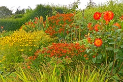 A colourful 'Garden Room' with flowering heleniums; dahlias; coreopsis; rudbeckia; grasses;