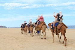 A column of camels in scenic Mexico. Travels.  Recreation. Exclusive sightseeing tour. Mexico. Camel ride. Cactus background