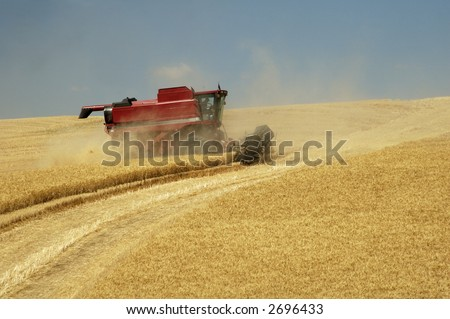 a combine harvesting the wheat crops in the rolling hills of the Palouse area of southeastern Washington state, summer 2006