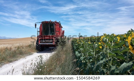 a combine is approaching on the agricultural track between a wheat field and a sunflower field