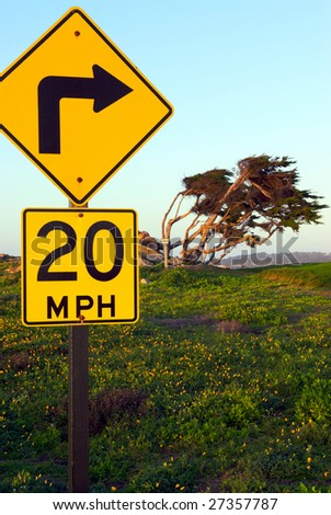 A comedic combination of a curved road sign and a pine tree curved by the wind