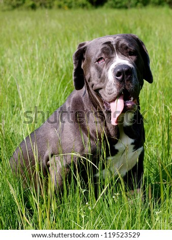 A comic looking dog sits panting in long grass