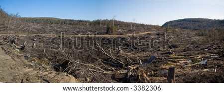 A completely devastated swath of boreal forest one year after a tornado followed by clearcutting.