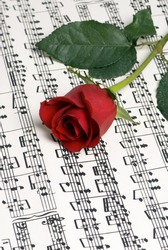 A complicated musical piece with a single rose on top. Representing the love of music, the simplicity of music and also the complexity.