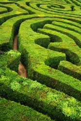 A complicated yet beautiful hedge row maze
