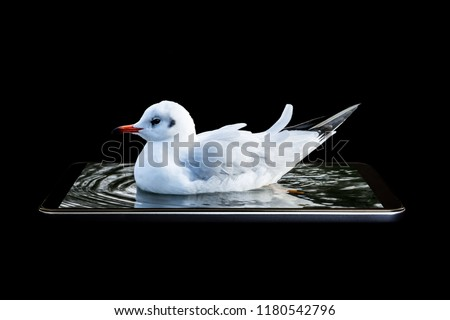 A conceptual creative 3D volumetric photo of a bird floating, sitting drifting in the sea water with waves in a gadget, in a smartphone isolated on a black background.