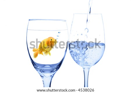 A conceptual shot of a goldfish in a glass water looking at water being poured into another glass